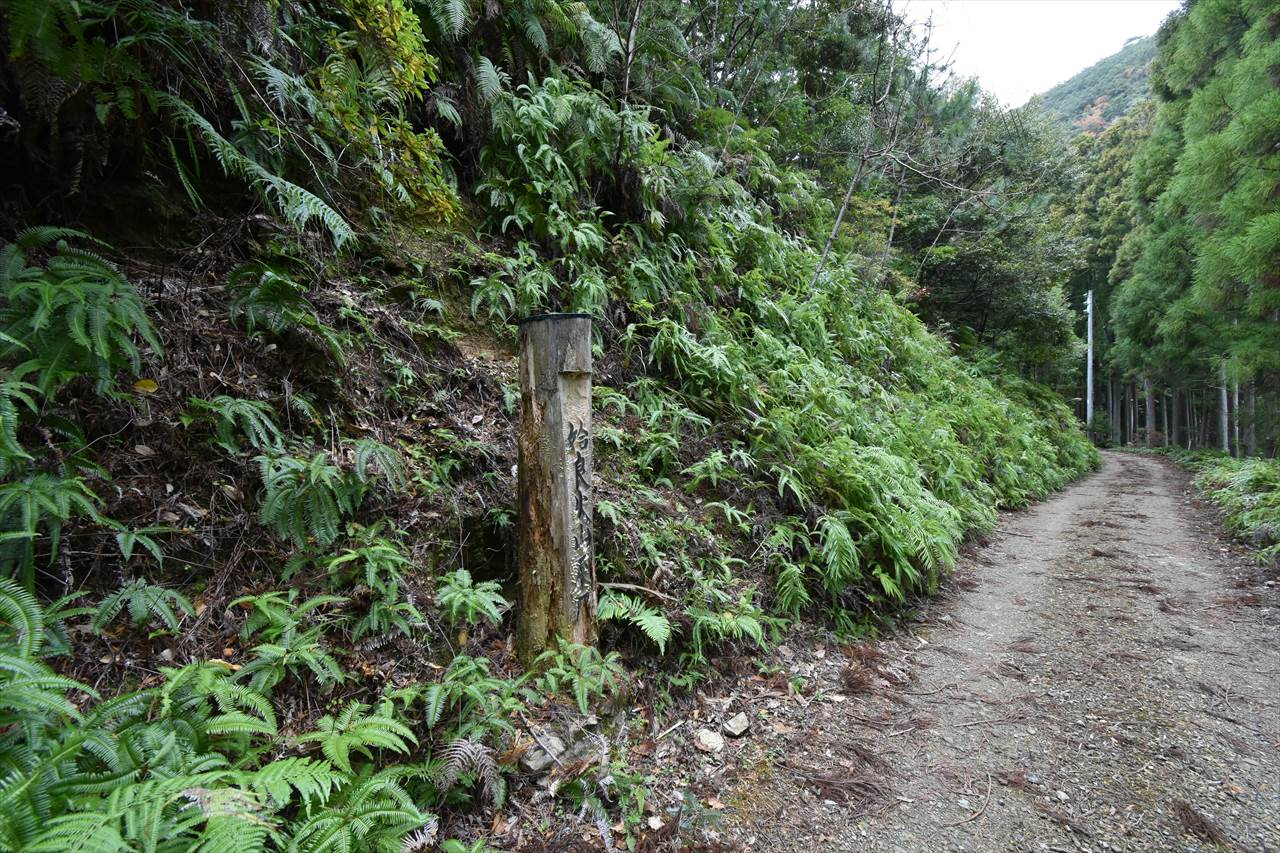 三ケ川の火山灰層