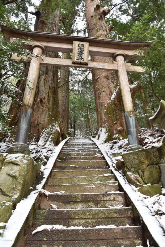 雪の継桜王子