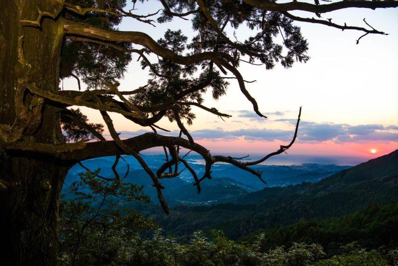 捻木の杉と夕焼け