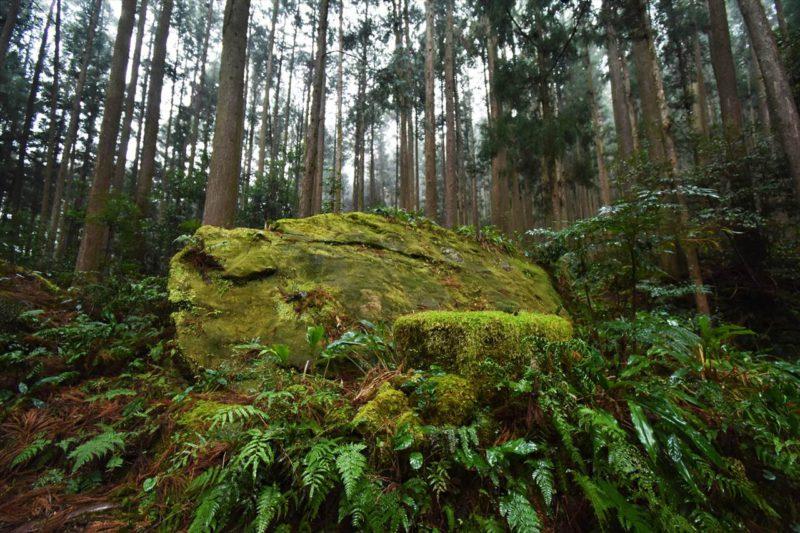 雨の円座石