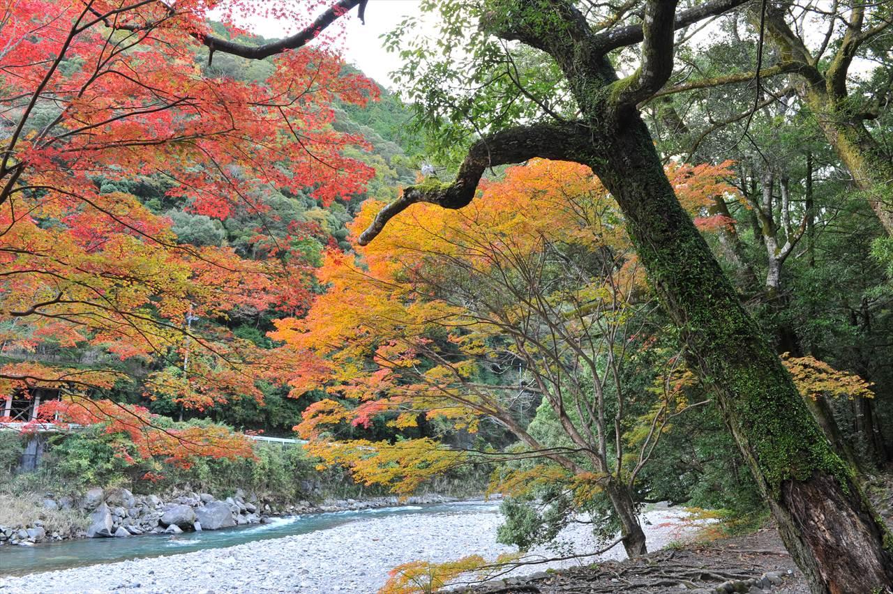 滝尻王子の紅葉