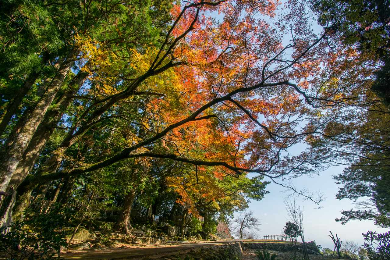 阿弥陀寺の紅葉