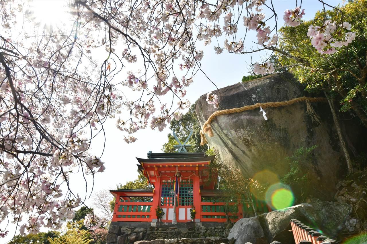 神倉神社の桜