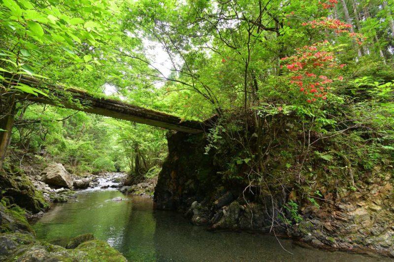 新緑の道湯川